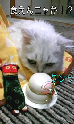 100101_もち.JPG