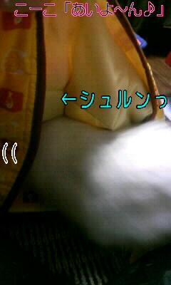 100101_コタツ3.JPG