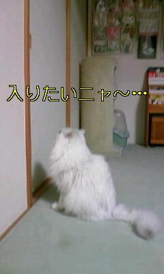 100101_フスマ2.JPG