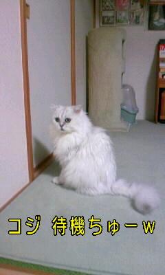 100101_フスマ1.JPG
